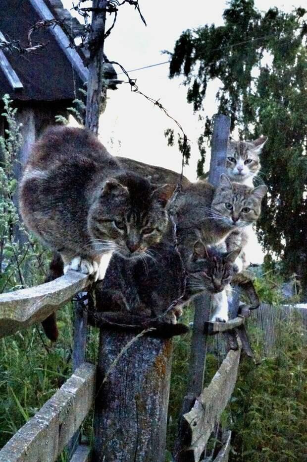 Селфи с отдыха город, домашние животные, забор, кот, кошка, село, улица, эстетика