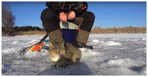 Щедрый рыбак угостил уловом кошку)))