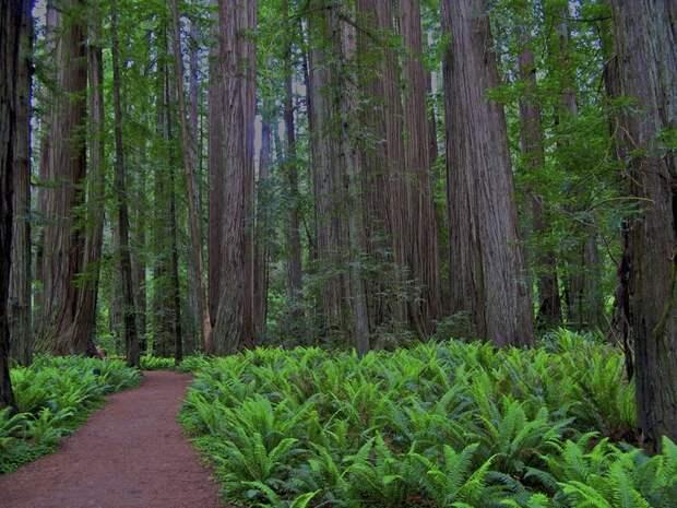 Национальный парк Редвуд