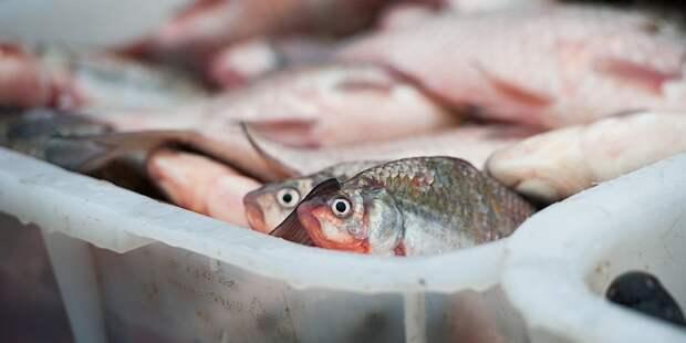Намибия продает права на вылов рыбы ради денег на борьбу с COVID-19