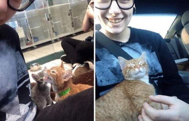 Пользователи сети поделились снимками своих котеев, сопроводив их забавными историями. И как тут сдержать улыбку?
