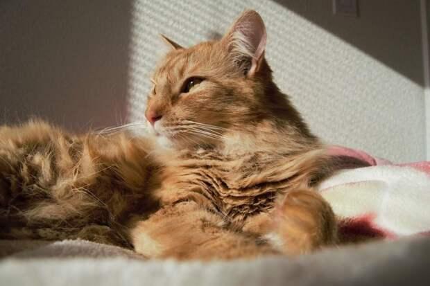 Новый кошачье-человеческий словарь для тех, кто хочет понимать своего кота с «полумяу»