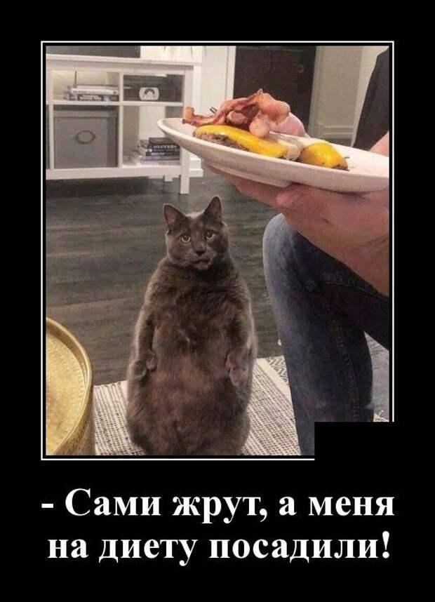 Демотиваторы. | Юмор про кошек, Смешные кошки, Шутки