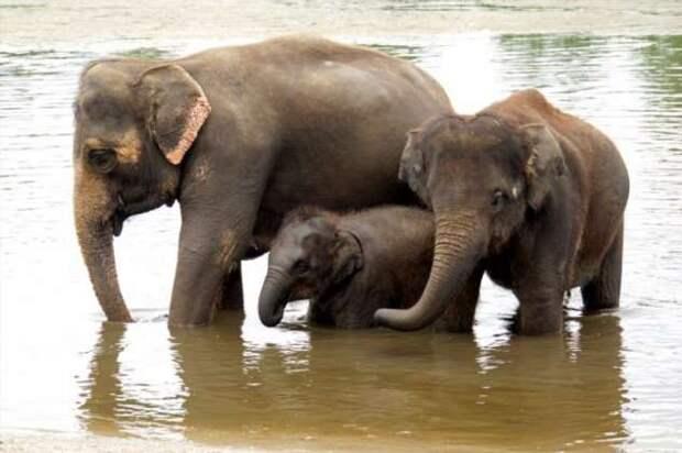 15+ животных, которых ваши внуки увидят только на картинках