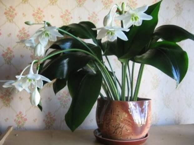 растение которое не стоит ставить в спальне