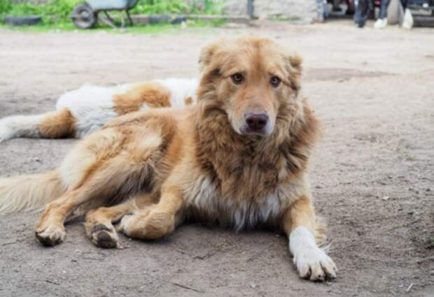 В Отрадном из конюшни пропали две собаки