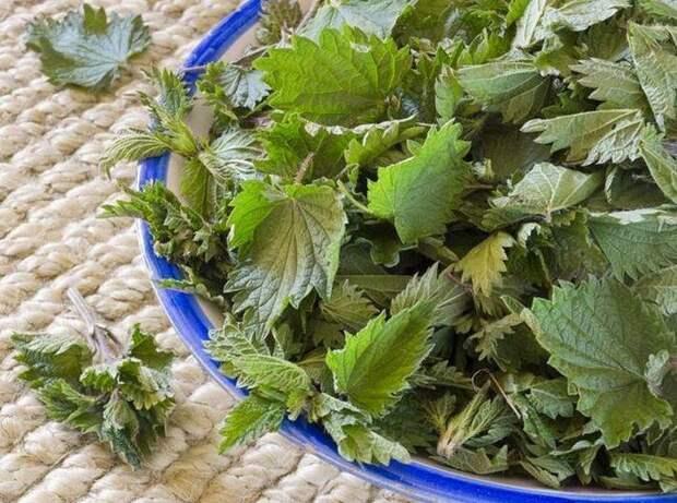 10 советов для хорошего урожая в саду и огороде