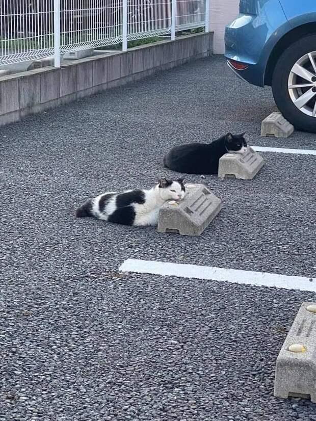 Коты на стоянке