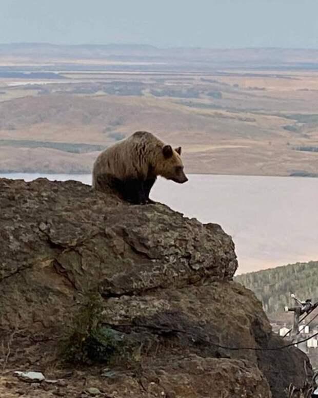 Известный ветеринар раскритиковал идею Текслера отловить молодых медведей для зоопарка