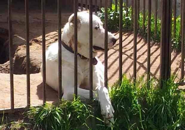 Волонтеры нашли 14 щенков алабая возле дороги. История их появления там кажется невероятной!