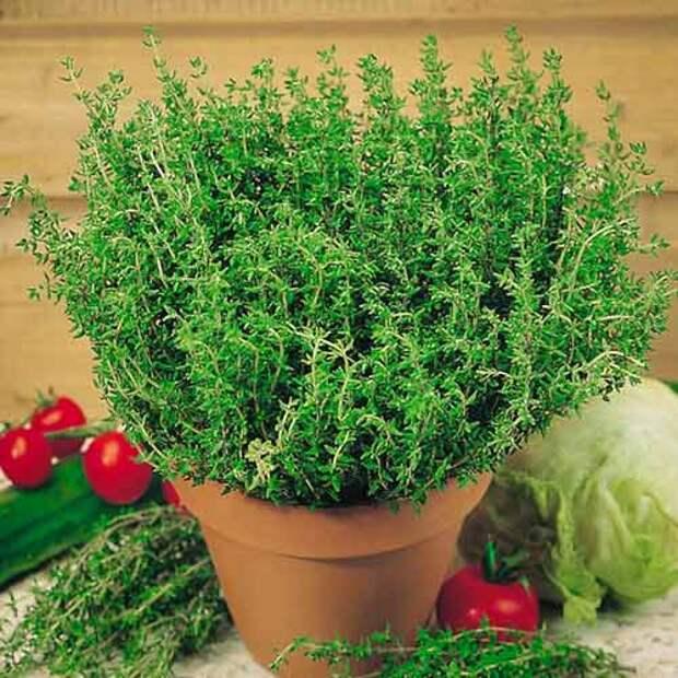 Знакомьтесь: ″сорняк″, который в сушеном виде лечит массу недугов