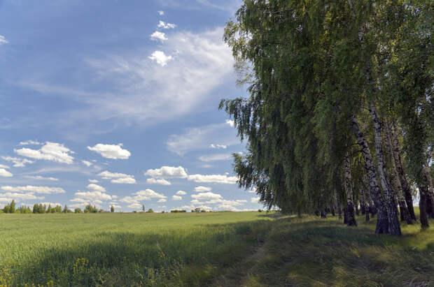 Birches by Valery Boyarsky on 500px.com