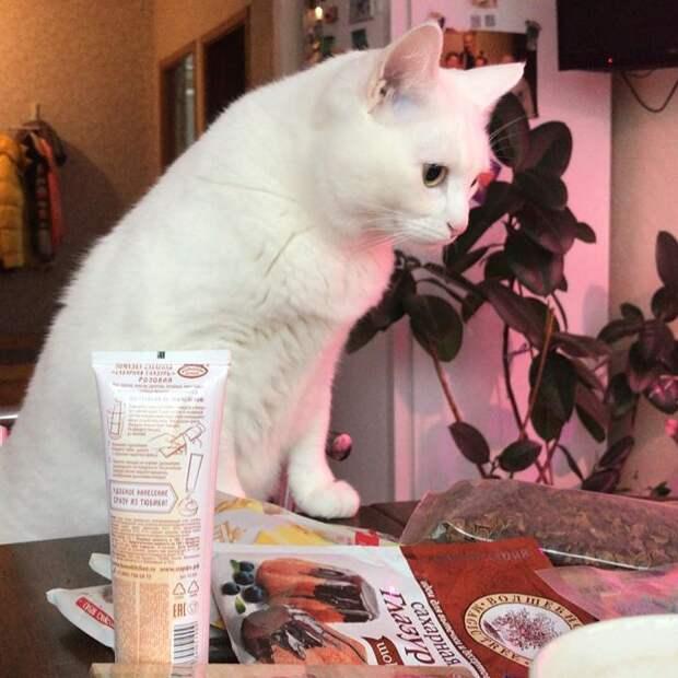 Самые распространенные ядовитые товары для кошек