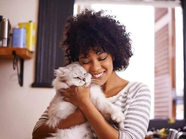 Я тебе не ути-пути, женщина! 15 котов которые терпеть не могут целоваться обниматься, без кота и жизнь не та, коты и кошки, приколы, приколы с котами, смешные коты и кошки, юмор