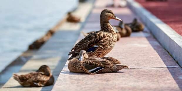Волонтеры помогут пересчитать птиц в парке «Кузьминки»