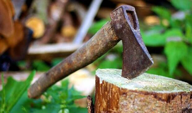 ВОрске варварская вырубка деревьев вылилась вуголовное дело