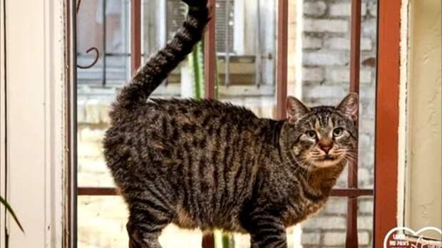 К несчастному котику все боялись даже прикоснуться, но одна женщина забрала его домой