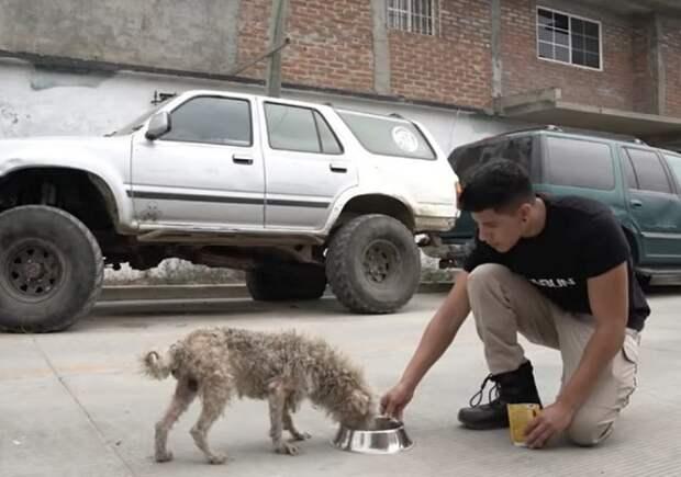 «Я тебе верю!»: больной пес избегал людей, но доверился доброму парню, который стал его другом