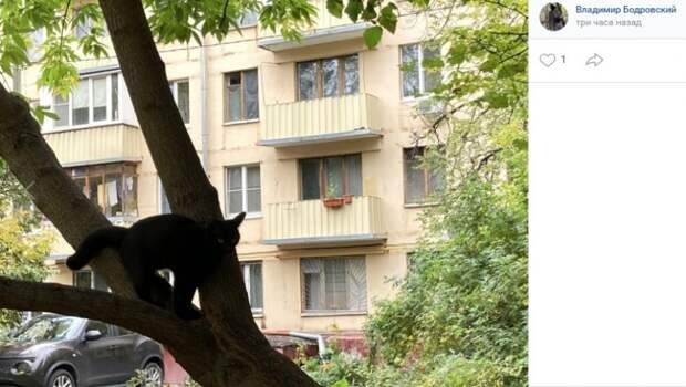 Фото дня: кот гуляет сам по себе на Коптевской