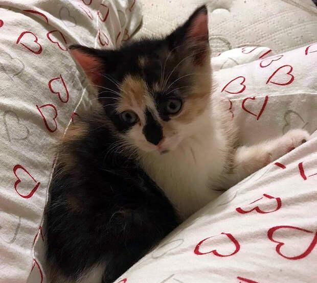История спасения котенка, который находился в клетке