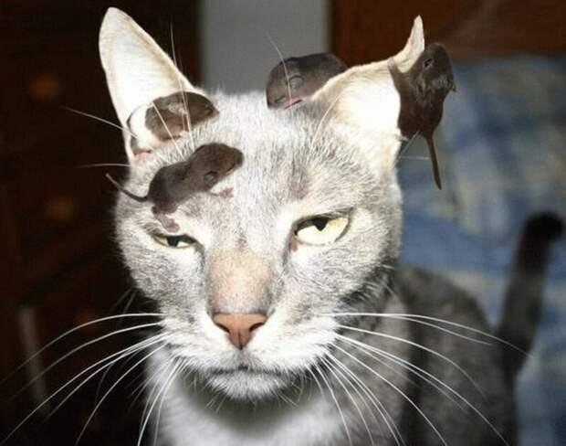 Это был худший день в его жизни животные, забавно, кот, коты, кошка, подборка, прикол, юмор