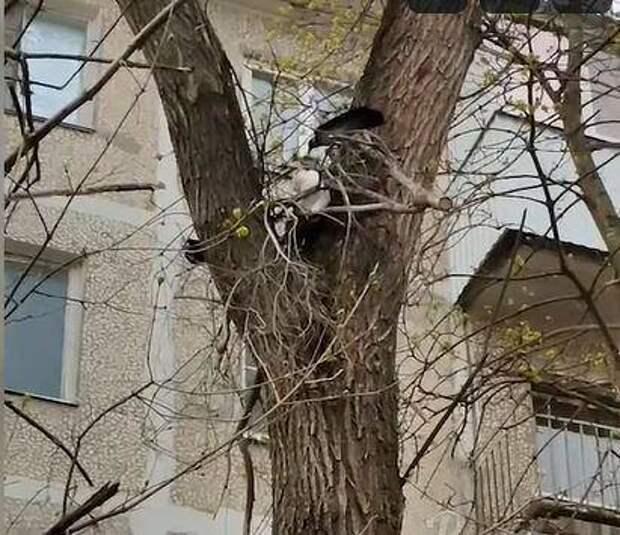 В Ростове птицы напали на залезшего на дерево кота