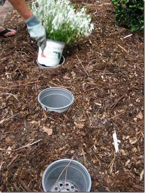 9. Сделайте двусторонние горшки, чтобы каждый год менять растения сад, советы, хитрость