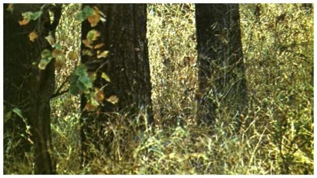 Тест на внимательность: найдите тигра в густой траве в лесу за 1 минуту
