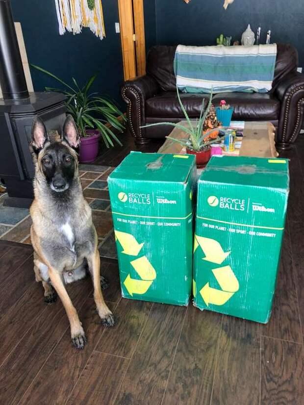пёс с коробками