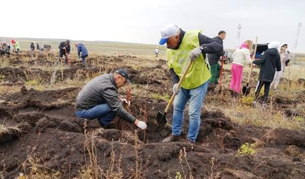 ВБашкирии вэтом году посадили более 2 миллионов молодых лесных растений