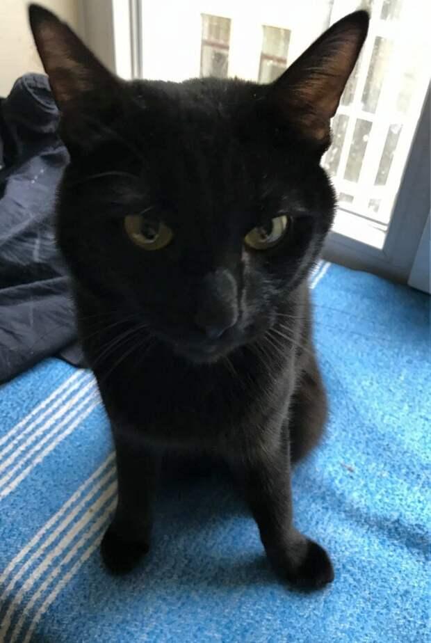 Несколько дней назад его нашли на улице, отчаянно плакавшего и подбегавшего ко всем прохожим с мольбой в глазах!..