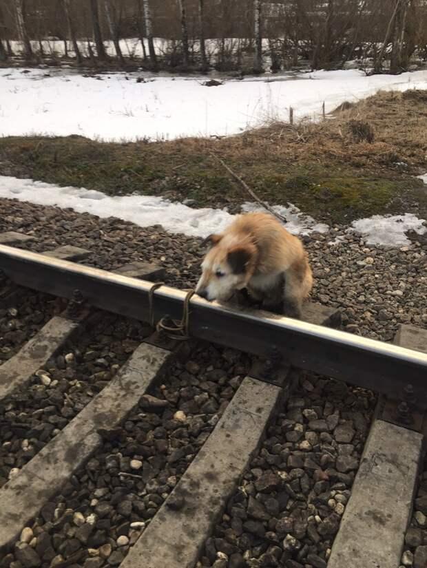 собака на рельсах
