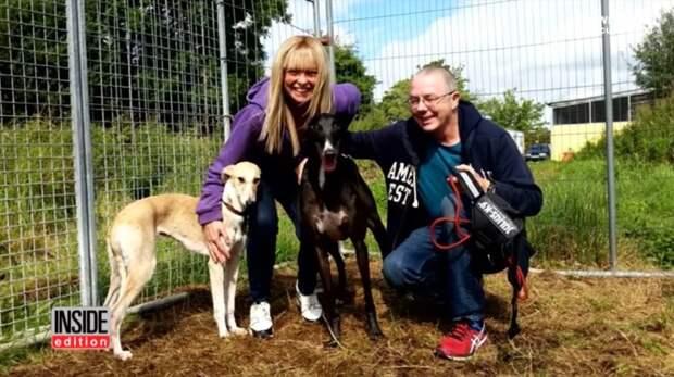 Как помочь собаке, с которой жестоко обращались? Каждое животное нуждается в уходе и заботеA greyhound mix recovers with the help of new family after horrible animal abuse