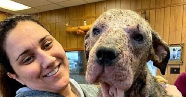 Женщина приютила и вылечила больную собаку, которую ждал печальный конец