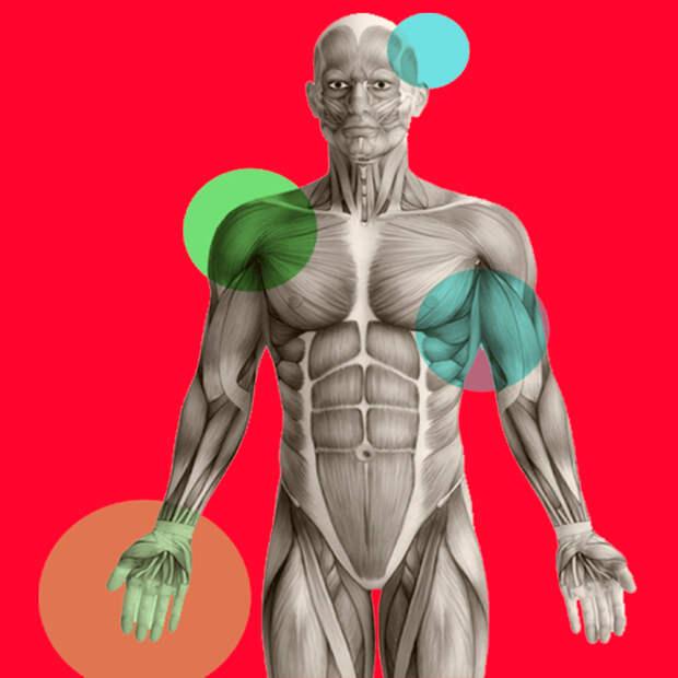 Подсказки организма, которые указывают на дефицит белка