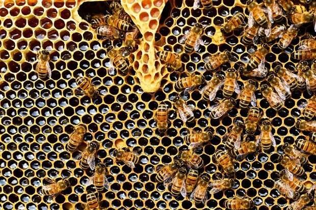 Пчелы из Кузьминок предсказали скорое потепление