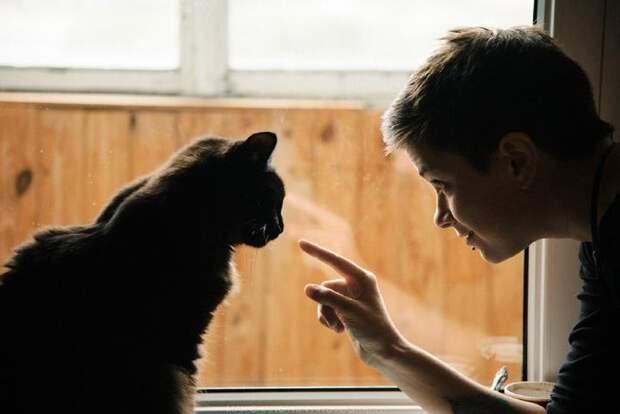 История про кота Котамбла, которая тянет наостросюжетную полнометражку