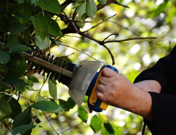 обрезка деревьев, садовые ножницы