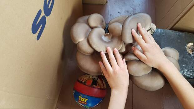 Море грибов с грядки и благодарная земля. Часть-1