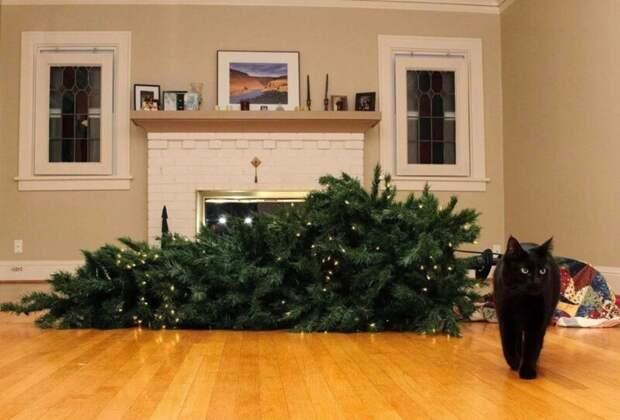 Почему коты так неравнодушны кновогодним елкам?