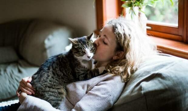 """16. """"Если я чихаю, мой кот тихонько мяукает, подходит ко мне и трется о лицо, пока я не возьму его на руки и не скажу, что все в порядке, это был всего лишь чих,"""" - VelociRAPTOR33 животные, забавно, забавные животные, истории, питомцы, подборка, собаки, хозяева"""