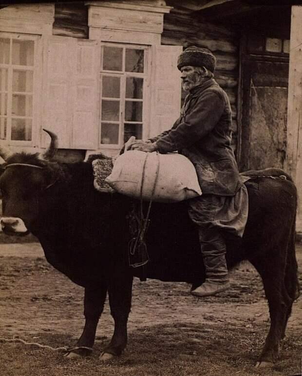 Перевозка клади на быке ( 1870–1880-е) дореволюционные снимки, интересно, кадр, россия, факты, фото
