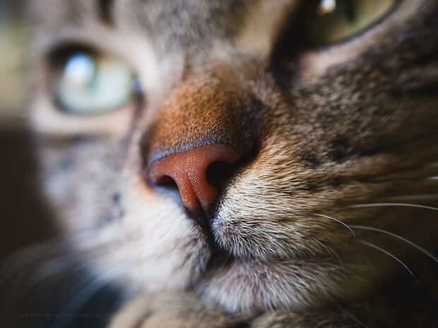 17. домашние животные, животные, коты, кошки, морда, нос, носики, фото кошек