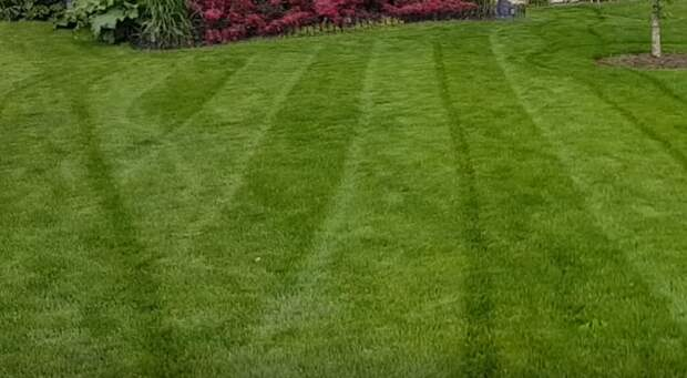 Красивая лужайка: уход за газоном