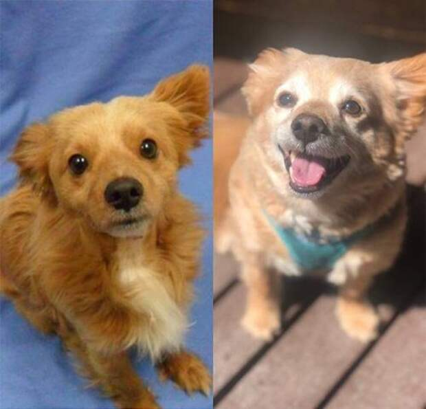 Животные до и после того, как обрели дом и любящих хозяев