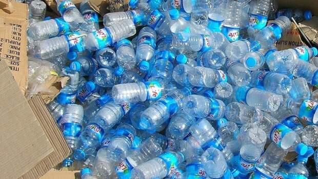 Биотехнологи нашли в Якутии перерабатывающих пластик жуков