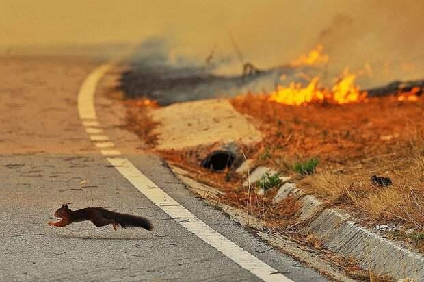 Поджигать сухую траву недопустимо - МЧС Фото: 2 РОНПР Управления по СЗАО
