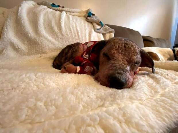 Неравнодушные люди выходили больную собаку и вот ее невероятное преображение спустя несколько месяцев