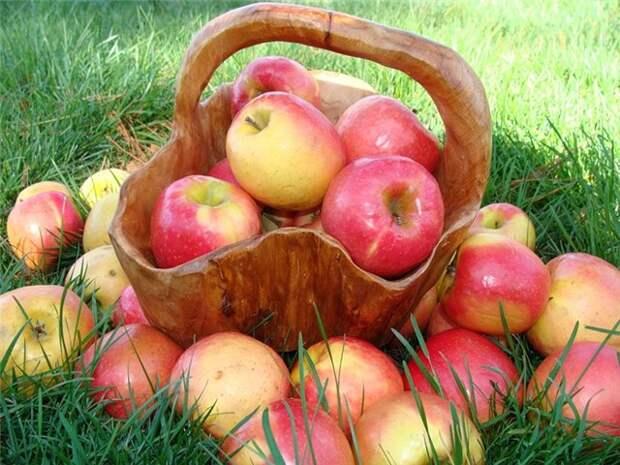 Обряды, ритуалы и приметы на Яблочный Спас