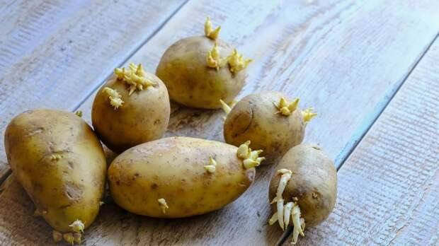 14 видов продуктов, которые вы можете вырастить из отходов дома
